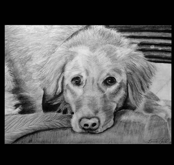 Image of Pet Drawing Commisions!