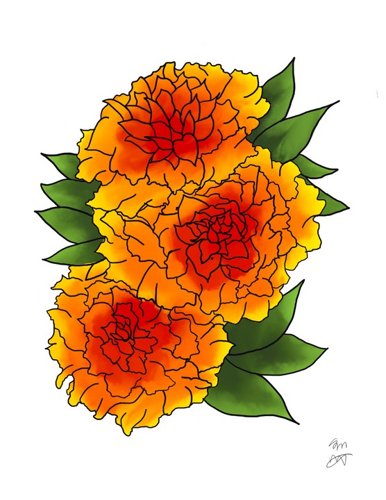 Image of Marigolds