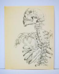 Image of Music in my Bones